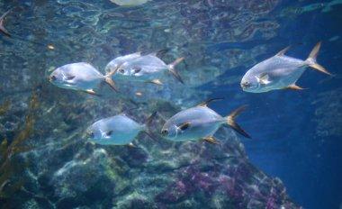 fishes in aquarium tank