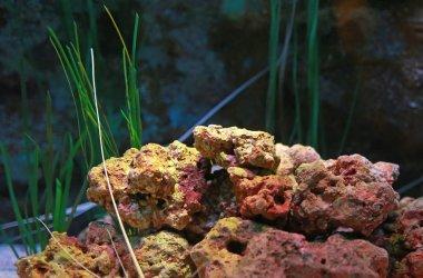 Aquarium tank for background.