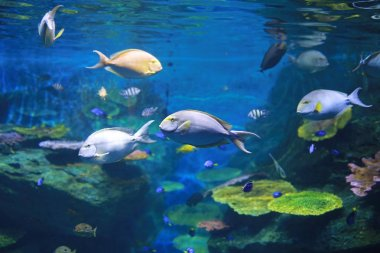 Coral and fishes in aquarium tank