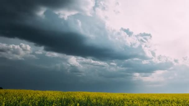 Zemědělská krajina s kvetoucí kvetoucí řepka, řepky olejné pole louce v jarní sezóně. Květu řepky žluté květy. Venkova časová prodleva, Time-Lapse. Pánev