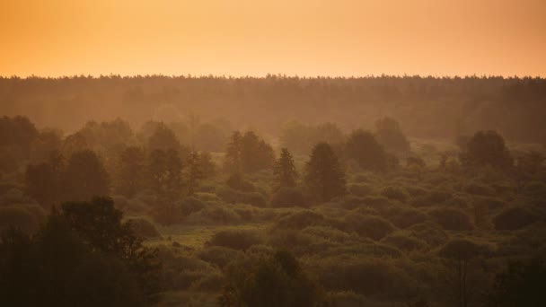 Sunrise Over Misty Forest Landscape In Early Morning. Scenic View Of Yellow Sky Above Forest. Summer Nature Of Europe. Time Lapse, Timelapse, Time-lapse