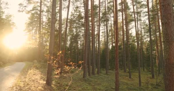 Vinutí venkov silniční cesty chodník přes les na podzim. Slunce
