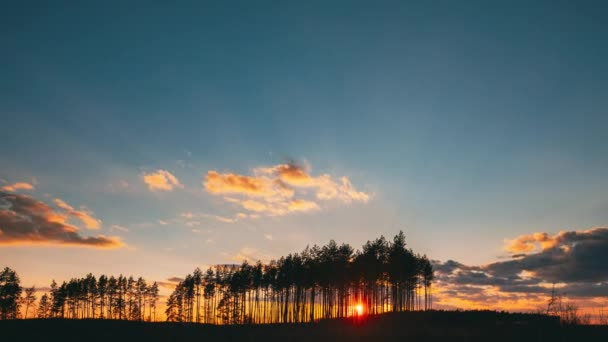 Západ slunce v borovém lese. Slunce slunce v jarní Slunečné jehličnatého lesa. Sluneční paprsky sluneční světlo svítí skrze lesy v krajině. Světlé barevné dramatická obloha a tmavá půda se stromy siluety