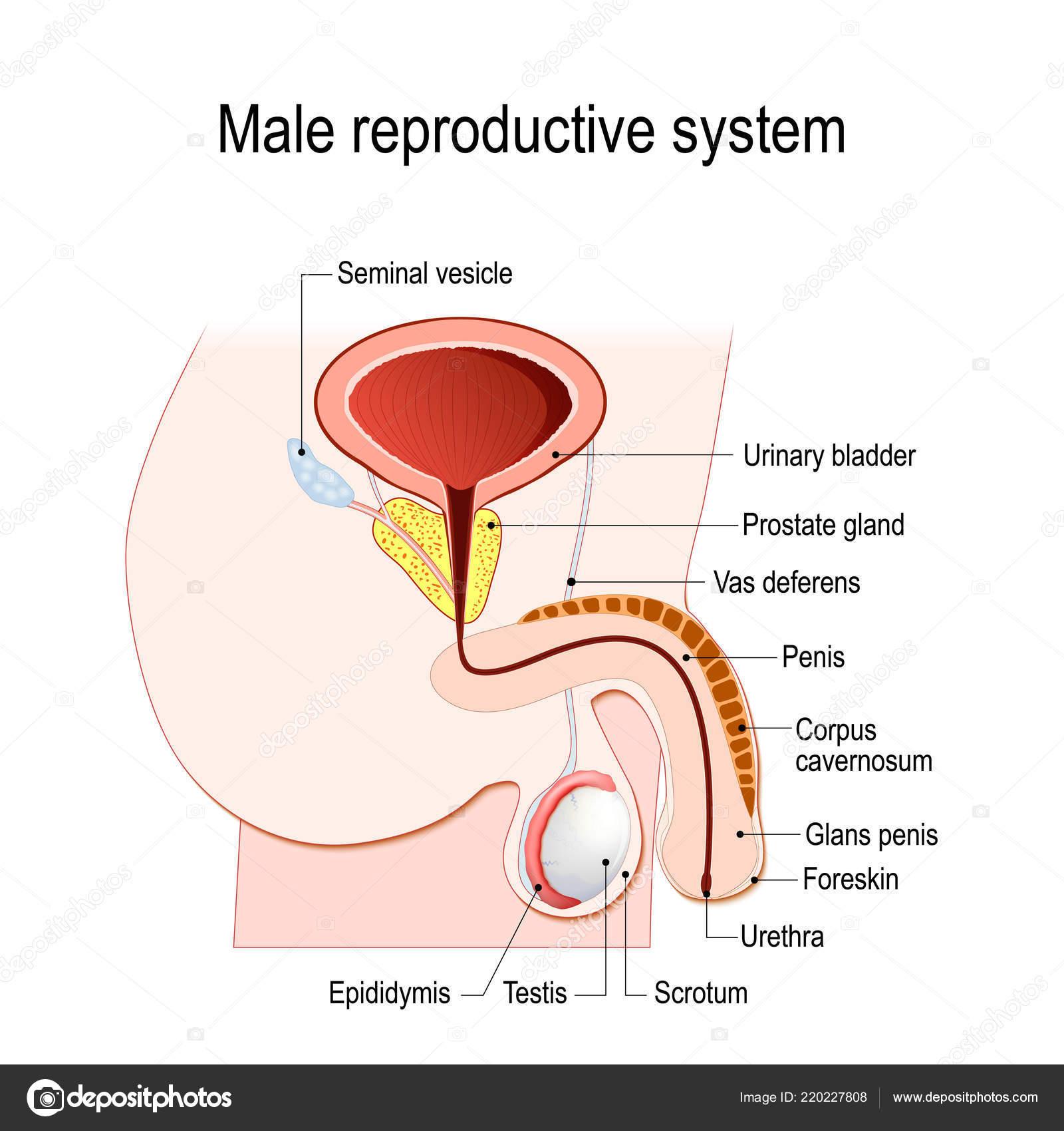 Mi a prostatitis manifeszt