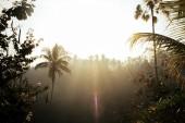 Krásná tropická lesní v sluneční paprsky