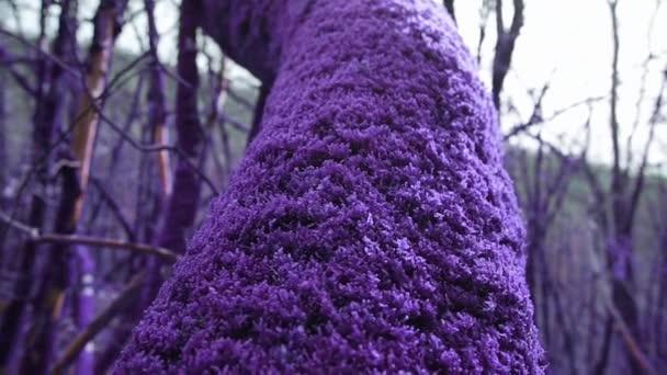 Lila mesebeli erdő. Nőtt varázslatos vastag lila moha fa törzse közelről. Fantázia, irreális, mesebeli hangulat