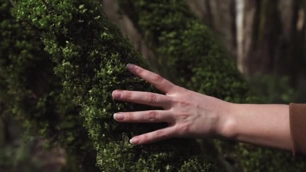 A female hand touches curly moss on a tree trunk in a close-up
