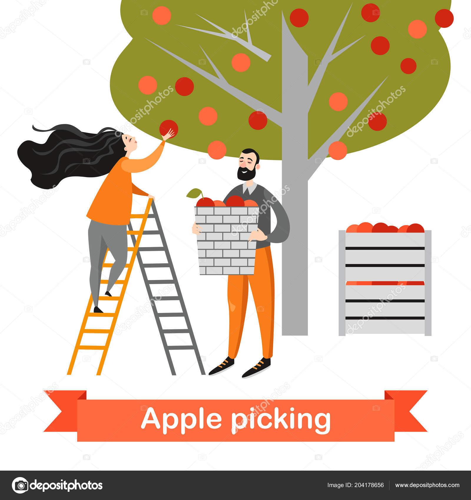 Zwei Lustige Comic Figuren Sind äpfel Garten Pflücken Zeit Der