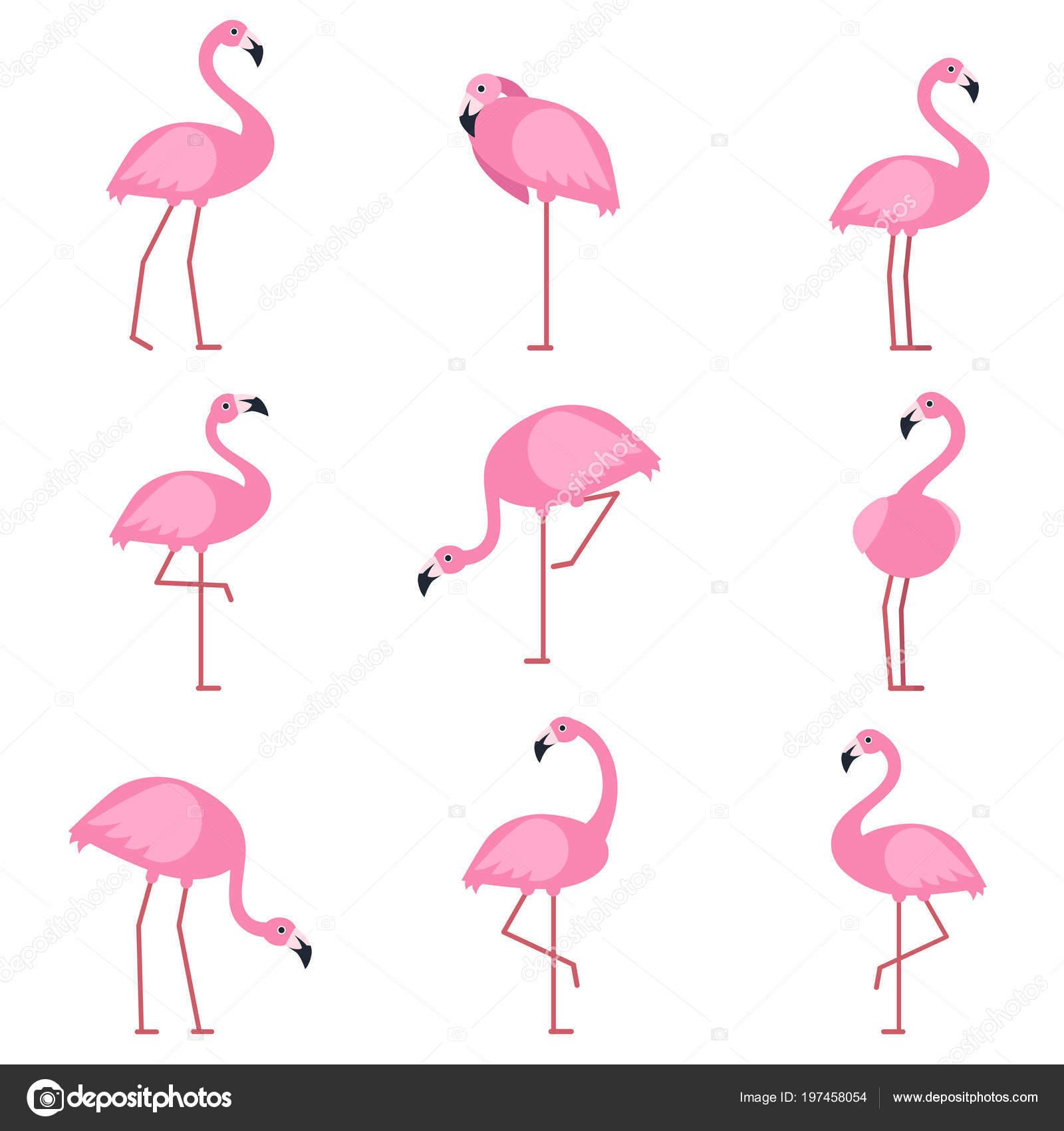 Egzotik Pembe Kuş Flamingo Resimleri çizgi Film Vektör çizimler