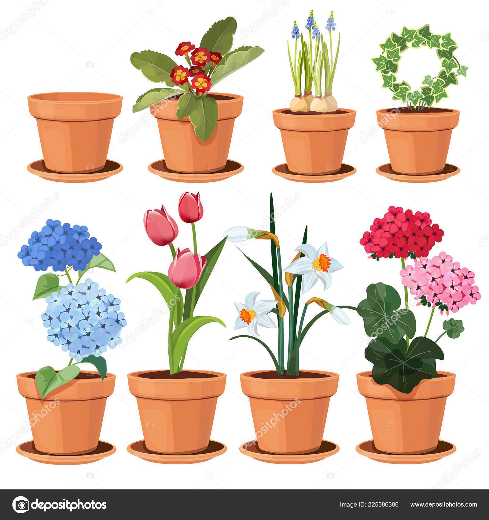 Maceta de flores plantas decorativas de colores crecen en for Plantas decorativas hidroponicas