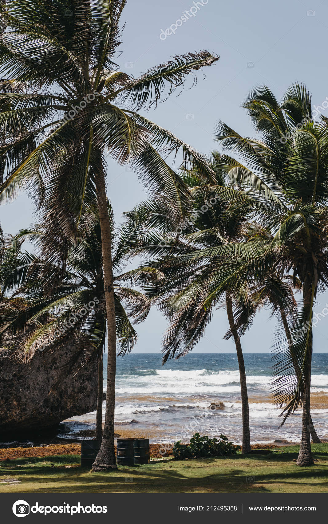 View Palm Trees Bathsheba Beach Barbados Badly Affected