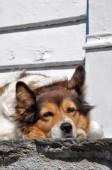 portrét psa v zimě