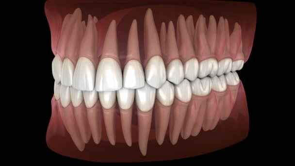 Morfologie mandikulární a maxilární lidské gumy a zubů. Mediálně přesný zub 3D animace