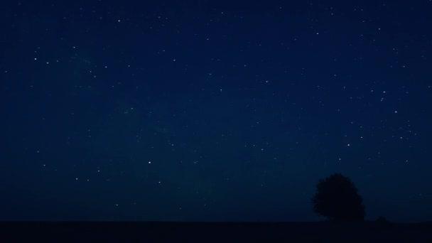 Magányos fa a területen, az éjszaka csillagos ég háttere