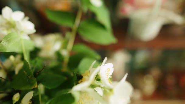 Kytice jasmín květy do vázy. Malá hloubka ostrosti