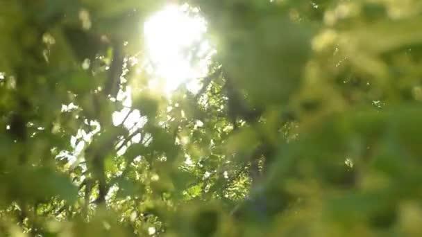 Krásné sluníčko přes foukání větru strom zelené listy