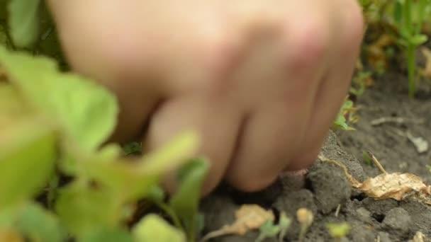 Bio zelenina. Zemědělci ruce s čerstvě sklizené zeleniny