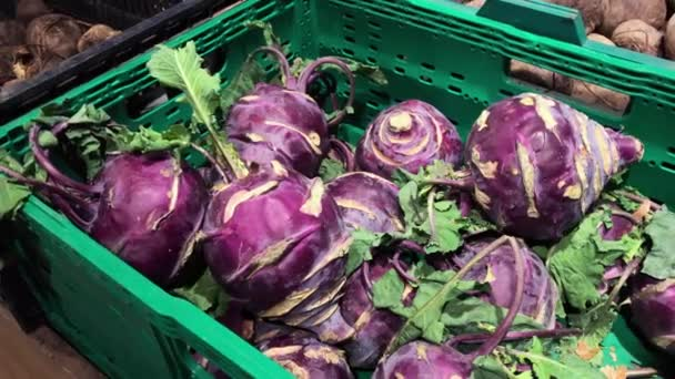 Womens hands holding kohlrabi. Autumn harvest and healthy organic food concept.