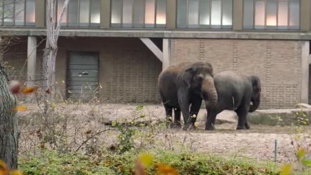 Elephant family in Berlin Zoo. Closeup shot. 4k resolution.