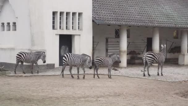 Berlin, Németország - 2018. november 23.: Egy csorda afrikai zebrák és antilopok graze, a berlini állatkert park.