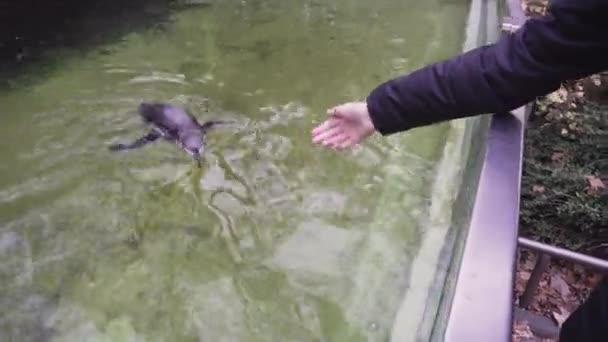 Állatkerti látogató kéri egy pingvin, és stroke a hátán.