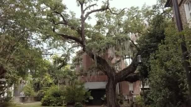 Krásný strom na pozadí obytné budovy. Rekreační oblast na dvoře 4k