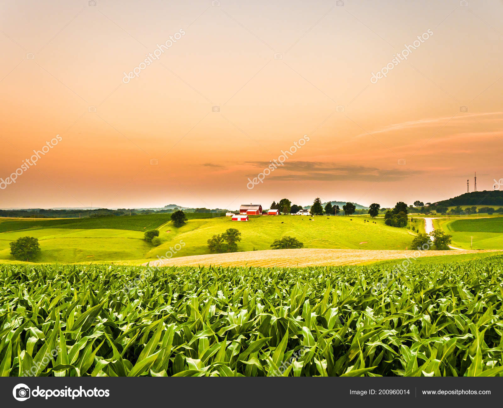 Gorgeous Panoramic Farm Agricultural Scene Corn Field