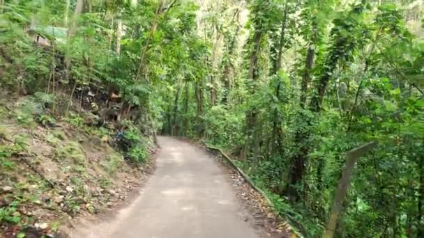 Walking down a curved paved road in Ocho Rios with trash littering side of road and damaged railing on the other on tropical island of Jamaica with lush green foliage, trees and vines lining the road.