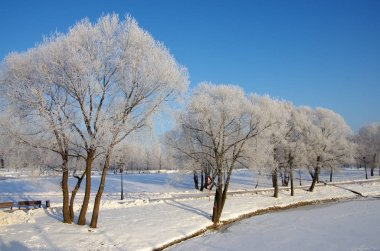 Winter day in the park of the Tsaritsyno estate in Moscow, Russi