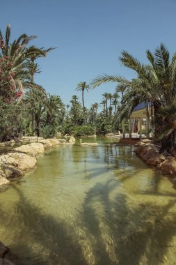 landscape in vertical view of pond and palm trees in El palmeral park on a sunny day in the city of alicante, spain
