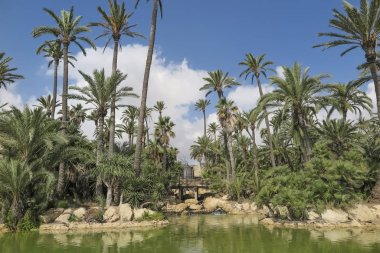 landscape with palm trees, lake, waterfall and small wooden bridge inside El palmeral park on a sunny day in the city of alicante, spain