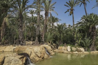 landscape with palm trees, lake and three small waterfalls inside El palmeral park on a sunny day in the city of alicante, spain