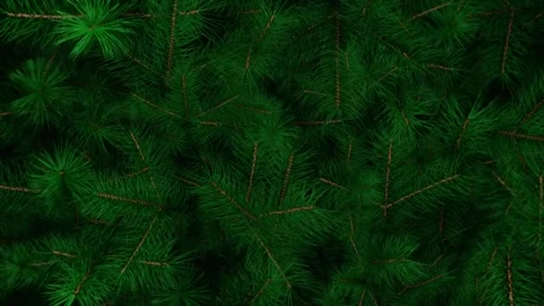 Christmas tree background. Christas branches. New Year fir tree with decorations and illumination. Xmas tree decorations background. New Year and Christmas 2021. Loop animation 4K