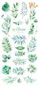 Fotografie set of green leaves on white background, watercolor illustration
