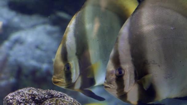 Akvárium, akvária, korálový útes, zvířata, příroda
