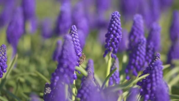 Erstaunliche lila Blumen in sonnenbeschienenen Provence