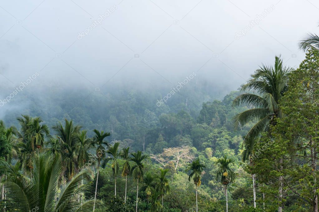 Ladskape of wild Tropical Thailand nature. Forested mountains are smoking. Morning fog and clouds above evergreen conifers.