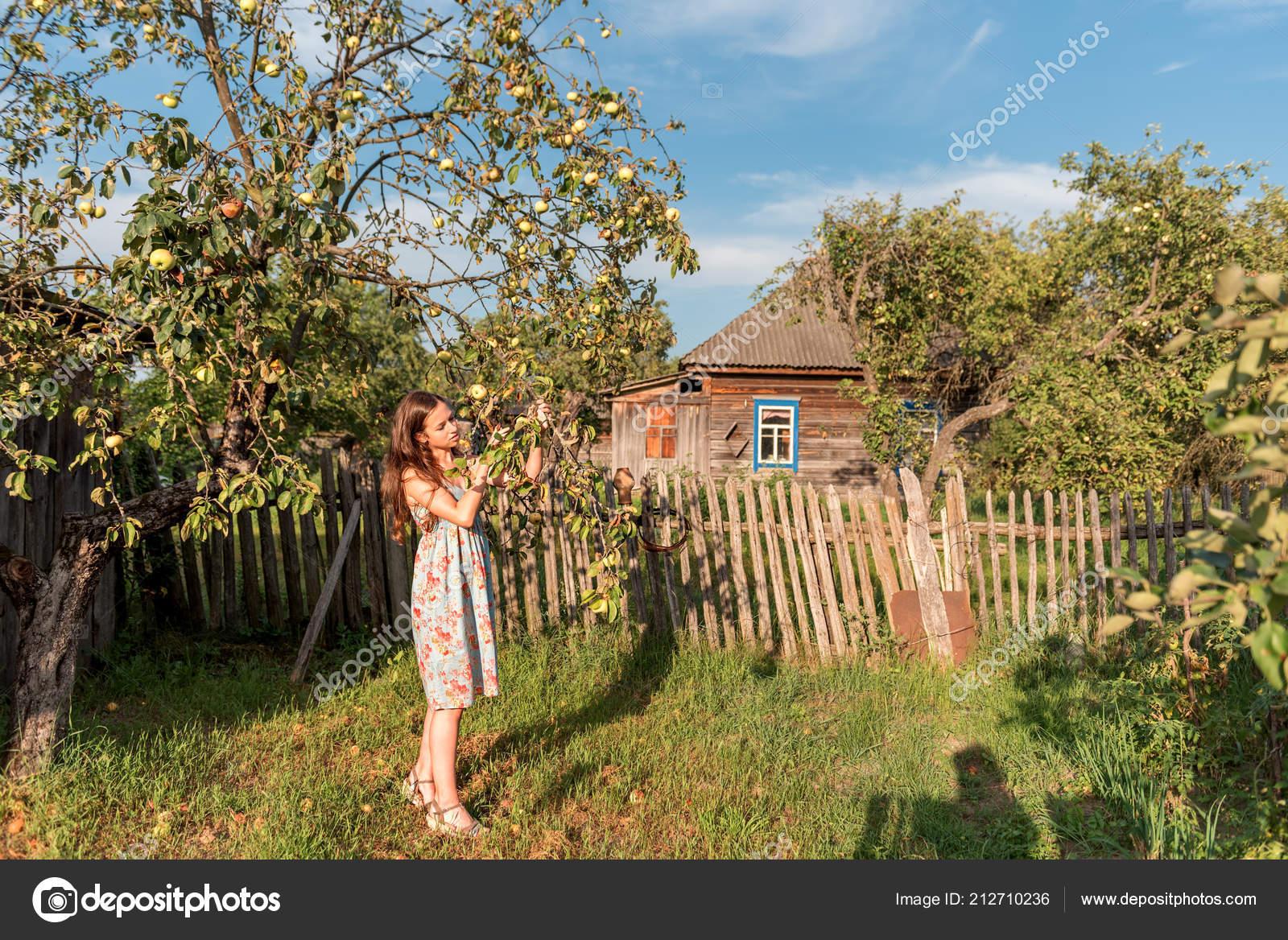 Dans Jardin Rustique Près Vieux Pommier Une Maison Rurale ...