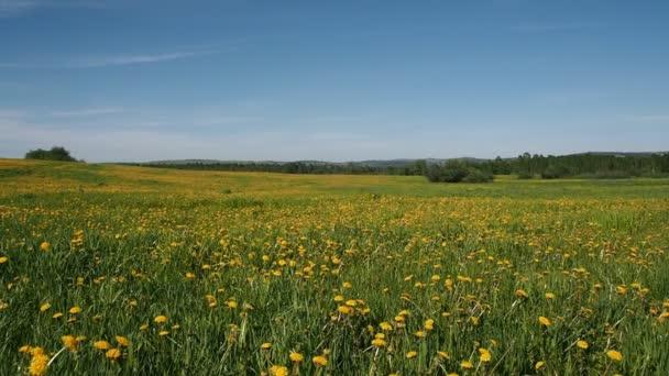 Schöne Gebiet mit gelber Löwenzahn