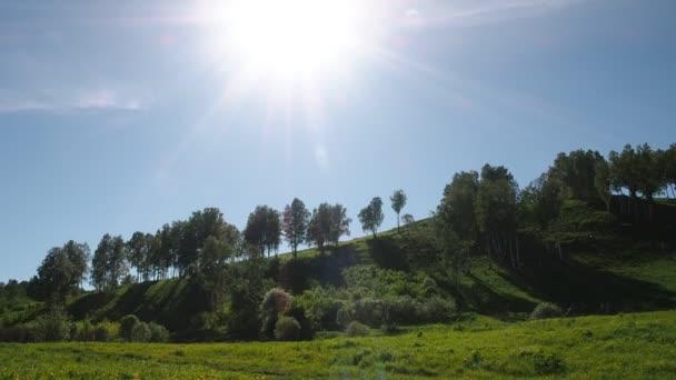 Březový les na kopci