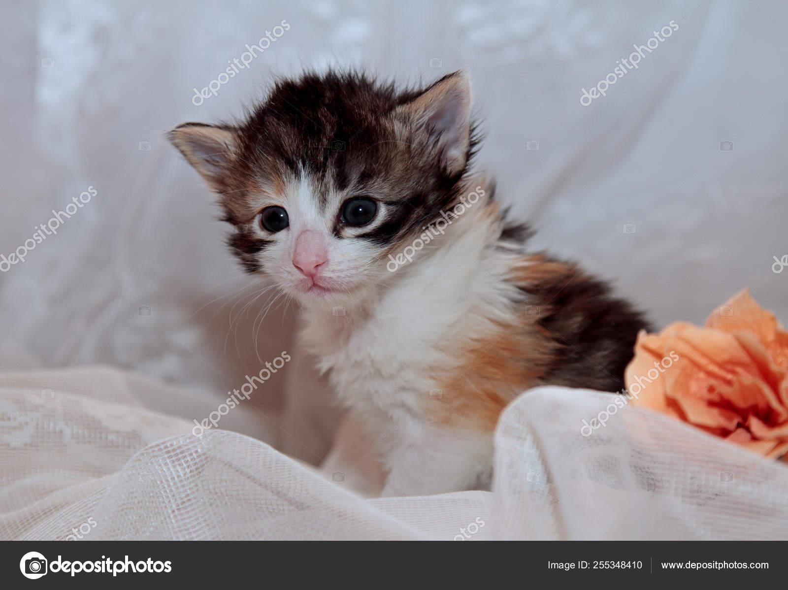 malá sladká kočička