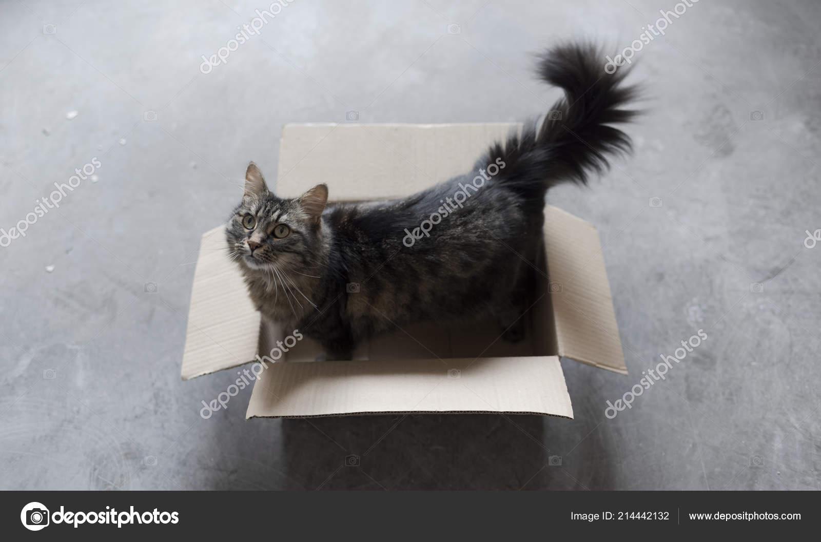 roztomilá kočička otevřena