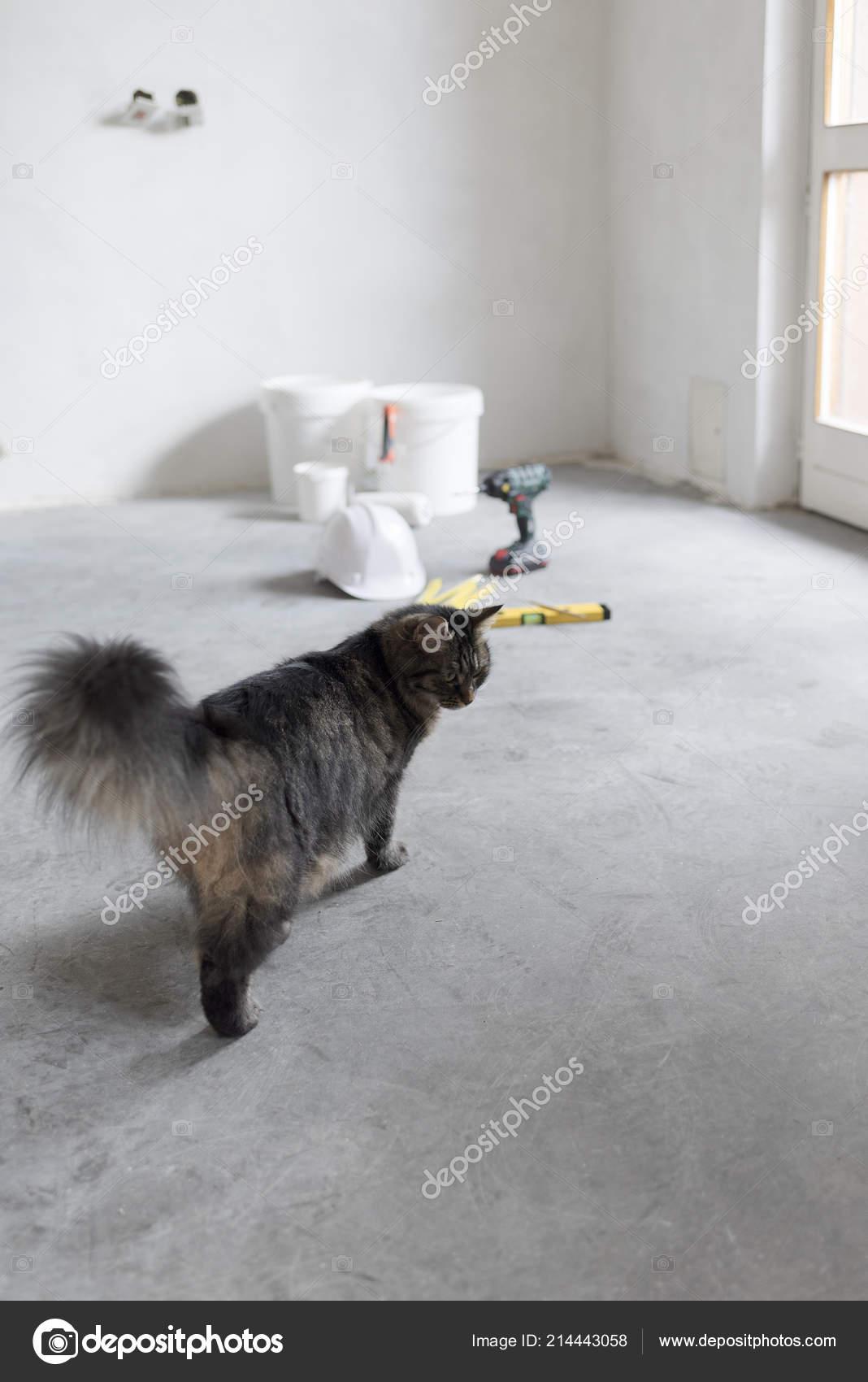 d7b869acee98 Χαριτωμένα μακριά μαλλιά γάτα να εξερευνήσετε ένα υπό κατασκευή δωμάτιο στο  σπίτι — Εικόνα από ...