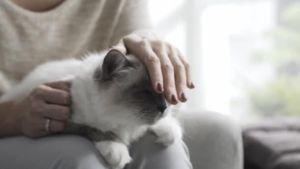 Žena mazlit krásná kočka na její klín, domácí zvířata a životní styl konceptu
