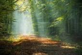 Fotografie Schönen guten Morgen Sonnenstrahlen im nebligen Wald