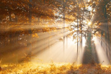 beautiful dawn in yellow autumn forest