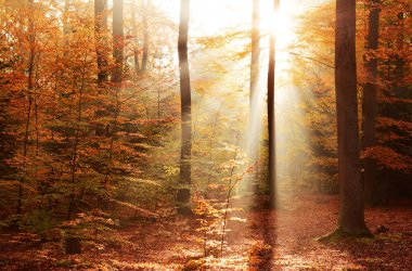 beautiful autumn forest with morning sunshine