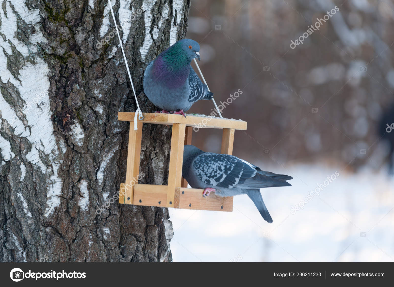 Two Pigeons Eating Wooden Feeder Park Winter Day Stock Photo
