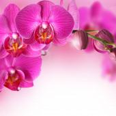 Růžová orchidej květinové pozadí