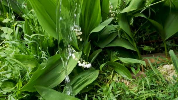 Close-up of lilies of the valley swaying in the wind. The beauty of white flowers and greenery causes pleasant feelings and relaxation